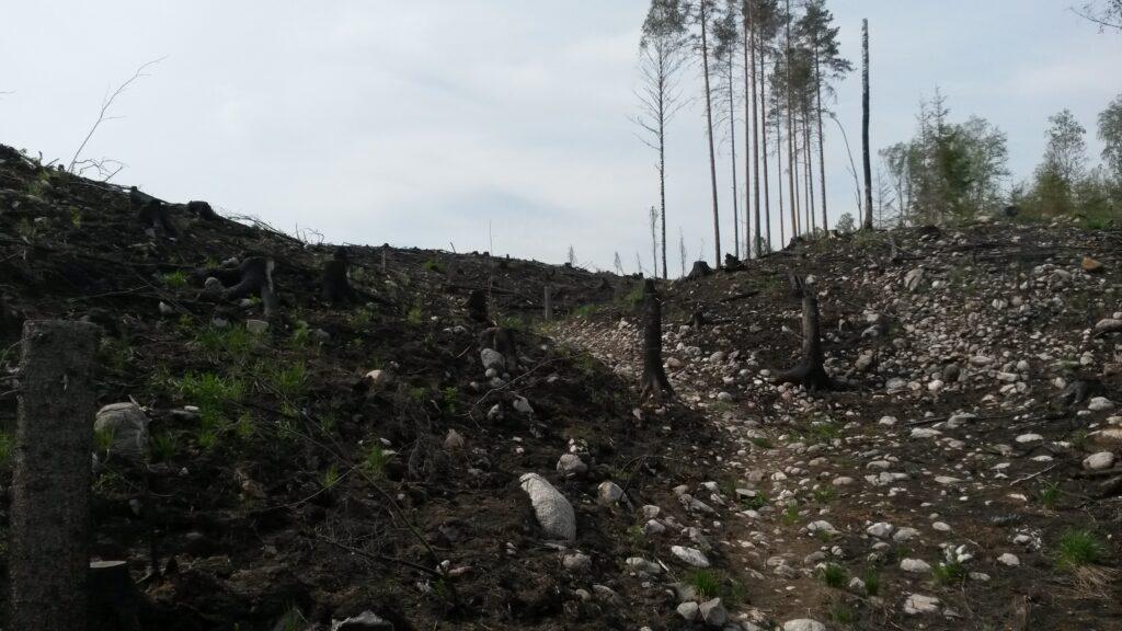 Avohakattu metsä, jossa muutama yksinäinen puu pystyssä. Kivinen maasto.